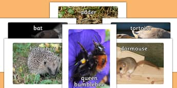 Hibernating Animals Photo Pack - hibernating, animals, photo pack, photo, pack