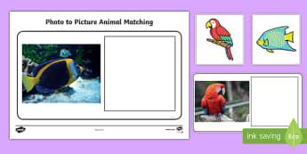 Workstation Pack: Photo to Picture Animal Matching Activity Pack