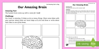 Our Amazing Brain Worksheet / Activity Sheet - amazing fact august, human body, science, physical activity, mental activity, organs, worksheet