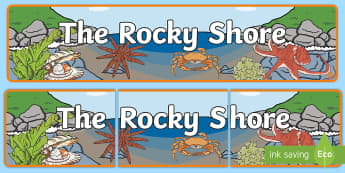 The Rocky Shore Display Banner - New Zealand, seaside, rocky shore, tide pools, tides, ocean, crabs, sea animals