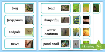 Pond Life Word Cards - Life Cycle of a Frog Display Photos - Frog, life cycle, lifecycle, display, photo, display Photos, d