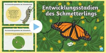 Die Entwicklungsstadien des Schmetterlings PowerPoint Präsentation - Schmetterling, Raupe, Puppe, Kokon, Tiere, Insekten,,German