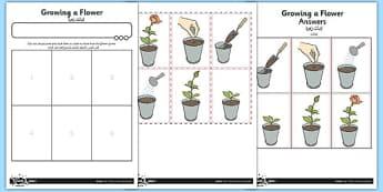 Worksheet / Activity Sheet Growing a Flower Arabic Translation - arabic, worksheet / activity sheet, growing, flower, worksheet