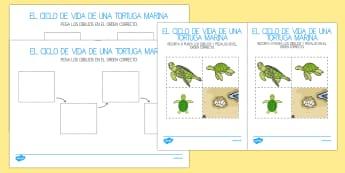 El ciclo de vida de una tortuga de mar Ficha de actividad