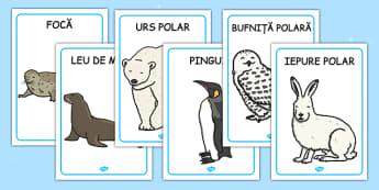 Animalele de la Poli - Planșe - animale de la poli, Poli, iarnă, planșe, de afișat, animale polare, romanian, materiale, materiale didactice, română, romana, material, material didactic