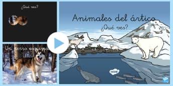 Presentation: Los animals del ártico - powerpoint, presentación , presentacion, ártico, animales árticos, animales polares, polar,Spanis