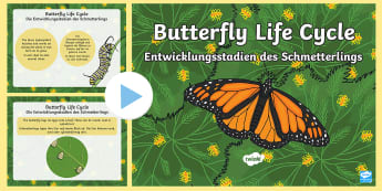 Butterfly Life Cycle PowerPoint English/German - caterpillar, insects, minibeasts, EAL, German, English-German,,German-translation