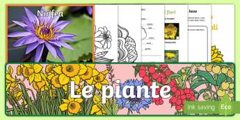 Le piante Pacco 10 Attività - natura, piante, naturale, scienze, lezione, italiano, italian, materiale, scolastico