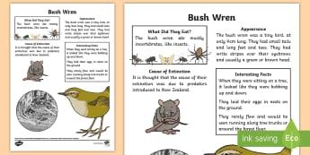 NZ Extinct Birds Bush Wren Fact Sheet - Aotearoa, native birds, extinct, Year 1-3, birds, fact file, bush wren