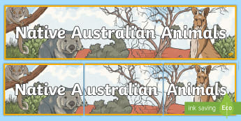 Native Australian Animals Display Banner - -Australia - Literacy, australian animals, factfile, information, diet, habitat, Australia, animals, reading, com