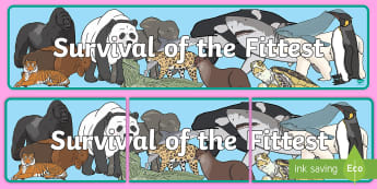 Survival of the Fittest Display Banner - Endangered Animals Display Banner - endangered animals, animals, in danger, display, banner, sign, p