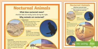 Nocturnal Animals Display Poster - australian animals, diurnal, night, ACSSU043, adapt, adaptation,Australia