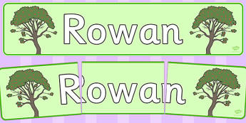 Rowan Display Banner - tree, rowan, nature, banner, display, woods, header, forest