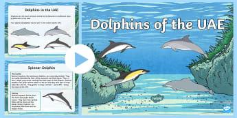 Dolphins of the UAE PowerPoint - uAE animals, Arabian Sea, UAE Fauna, Arabian gulf
