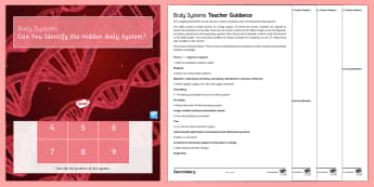 Body Systems Quick Quizzes - digestive, circulatory, reproductive, respiratory, enzymes