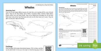 An Amazing Fact A Day South Africa Whales Worksheet / Activity Sheet  - whales, graphs, south africa, Measurement, sea life, research