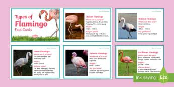 Flamingo Fact Cards - al wathba, birds, information, factfile