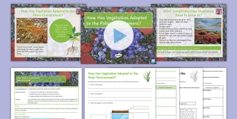 Polar Regions Lesson 4: How Has Vegetation Adapted to the Polar Environment? - Polar, Vegetation, Adaptation, Arctic, Tundra, Antarctic, Permafrost