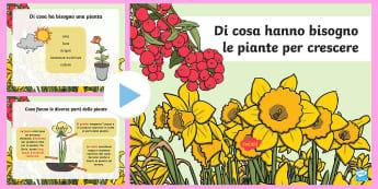 Di cosa hanno bisogno le piante per crescere Presentazione - natura, piante, naturale, scienze, lezione, italiano, italian, materiale, scolastico