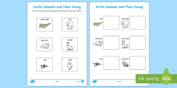 Arctic Animals and Their Young Matching Activity Sheet - The Arctic, Polar Regions, north pole, south pole, explorers, animals and their young, baby animals,