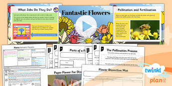 Science: Plants: Fantastic Flowers Year 3 Lesson Pack 5