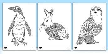 Adult Colouring Mindfulness Polar Animals Sheets - arctic, animals, mindfulness, colouring, sheets, colour, Polar, adult, adult mindfulness
