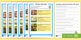 Chicken Life Cycle Differentiated Reading Comprehension Activity English/Mandarin Chinese - hen, chicken, chickens, rooster, cockerel, life cycle, reading, KS1, comprehension, questions,compre