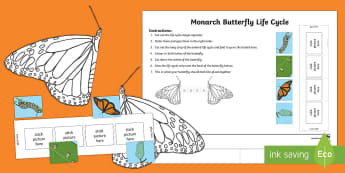 Monarch Butterfly Life Cycle Worksheet / Activity Sheet - Monarch butterfly, Life Cycle, NZ Native animals, butterfly life cycle, worksheet