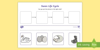 Swan Life Cycle Activity Sheet - Hen Life Cycle Worksheets - australia, hen, life cycle, sheet, austrailia, austrila, lfe cycles, aus