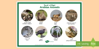 Arabian Animals Display Poster Arabic/English - Science, Living World, animals, Arabian, UAE, habitats, desert, camel, oryx, saluki, falcon, lizard,