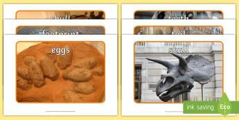 Dinosaur Fossil Display Photos - Display Posters, dinosaur, fossil, A4, display, posters, history, t-rex, stegosaurus, raptor, iguanodon, tyrannasaurus rex