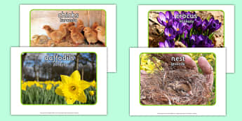 Spring Display Photos Polish Translation - polish, Spring, seasons, photo, display photo, lambs, daffodils, new life, flowers, buds, plants, growth