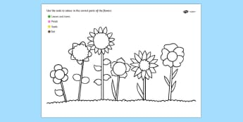 Colour Code Colouring Flowers Sheet - colour, flowers, wet play
