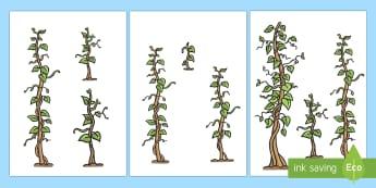 ترتيب أشجار الفاصوليا حسب الارتفاع  - الارتفاع، الطول، حساب، أطوال، قياسات، رياضيات، القياس