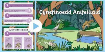 Pwerbwynt Cynefinoedd Anifeiliaid - cynefin, cynefinoedd, anifail, anifeiliaid, amgylchedd, Cymraeg, gwyddoniaeth, gwybodaeth a dealltwr