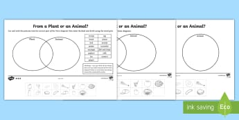 Animal or Plant Sorting  Differentiated Activity Sheets - animal, plant, meat, vegetable, fruit.