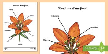 Schéma à compléter : la structure d'une fleur - printemps, plante, fleur, végétaux, le vivant, cycle de vie, reproduction, cycle 3, CM1, CM2, plan