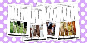 Farm Animals Number Sequencing Photo Puzzles - Farm, Animals