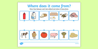 Where Does Food Come From Worksheet - food,work sheet, where does food come from, origin of food, cooking, cow, milk, pig, bacon