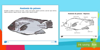 Feuille d'activités : Anatomie du poisson - schéma, sciences, poisson, mer, océan, cycle 2, cycle 3,French