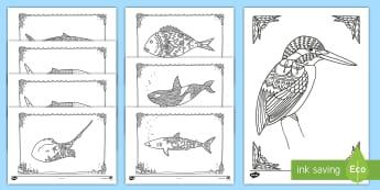 New Zealand Native Sea Creatures Mindfulness Colouring Pack - New Zealand Mindfulness, colouring, kookaburra, whale, shark.