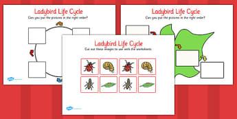 Ladybird Life Cycle Worksheets - KS1 Life Process Activities