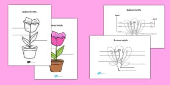Arkusz Budowa rośliny i kwiatu po polsku - przyroda