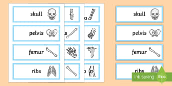 Bones of the Body Word Cards - bones, bone, bones of the body, body, body parts, word cards, words, cards