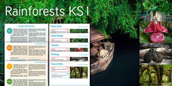 Imagine: Rainforests KS1 Resource Pack - River, Boat, Rope, Bridge, Flower, Monkey, Forest, Path