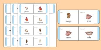 Parts of the Body Loop Cards Te Reo Māori - nz, new zealand, body, loop cards, loop, cards, activity