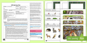 EYFS Storytelling Forest in a Bottle Adult Input Plan and Resource Pack - Forest, Woodland, Communication and Language, Understanding, Listening, Storytelling, Creative, Expr