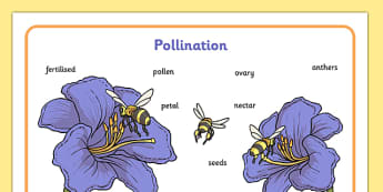 Pollination Word Mat - pollination, word mat, pollinate, bee, flowers, reproduce