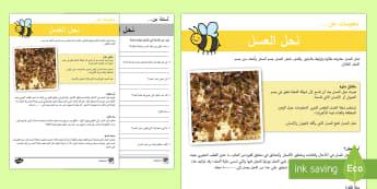نشاط الفهم القرائي نحل العسل - الفهم القرائي، قراءة، عسل نحل العسل، نحل، النحل، عربي,