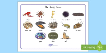New Zealand's Rocky Shore Animal Word Mat - rocky shore, new zealand sea animals, crabs, octopus, star fish, rock pools, tidal pools